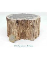 Bois fossilisé (pétrifié) - Rondins