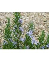 Hydrolat de Romarin Camphré - (Rosmarinus officinalis Camphoriferum ) - Eau florale