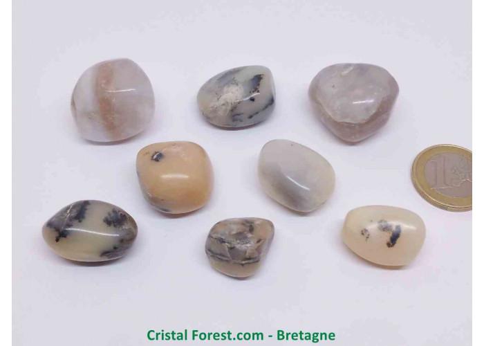 Opale mousse (Merlinite) 2,5-3cm
