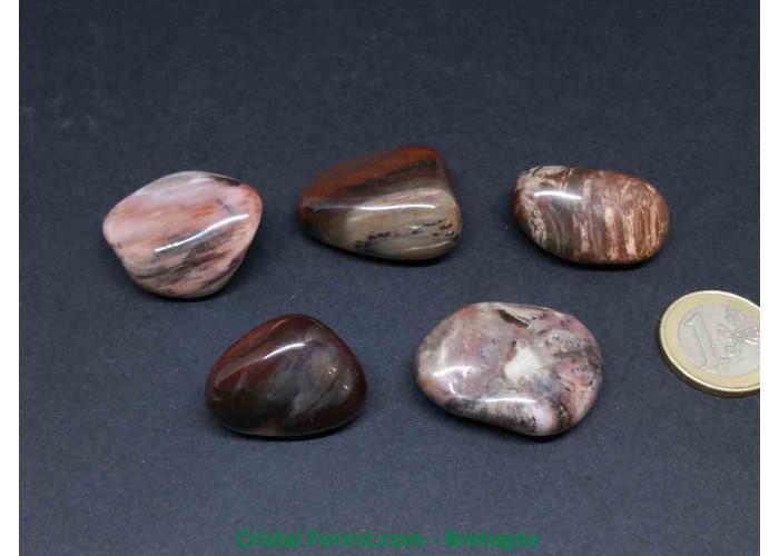Bois fossilisé - Pierres roulées - 2.3 à 4.3cm / Env 19gr